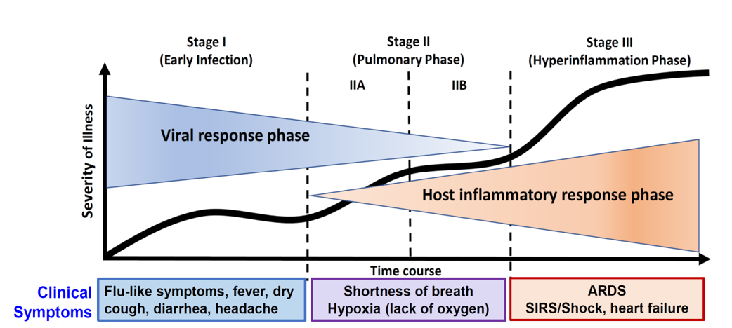 COVID-19 Infection Has Three Key Stages